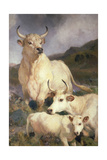Wild Cattle of Chillingham, Northumberland, C.1867 Giclee Print by Edwin Landseer