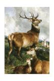 Deer of Chillingham Park, Northumberland, C.1867 Giclee Print by Edwin Landseer