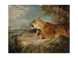 The Lioness, C.1824-27 Giclee Print by John Frederick Lewis