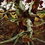 Andrew Wyeth -