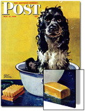 """Butch Gets a Bath,"" Saturday Evening Post Cover, May 11, 1946 Prints by Albert Staehle"