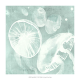 Spa Jellyfish V Giclee Print by Grace Popp