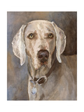 Tate Weimaraner Art by Edie Fagan