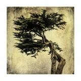 Grand Cypress Print by Honey Malek