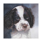 Minnie Springer Spaniel Poster by Edie Fagan