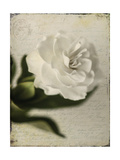 Gardenia Grunge II Posters by Honey Malek