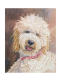 Honey Goldendoodle Premium Giclee Print by Edie Fagan
