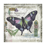 Butterfly Artifact IV Prints by Alan Hopfensperger