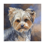 Sadie Belle Yorkshire Terrier Posters by Edie Fagan