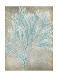 Spa Seaweed I Posters by Jennifer Goldberger