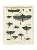 Histoire Naturelle Insects II Poster by  Diderot