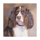 Annabelle Springer Spaniel Prints by Edie Fagan
