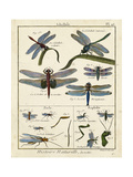 Histoire Naturelle Insects I Premium Giclee Print by  Diderot