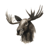 Western Animal Study III Print by Grace Popp