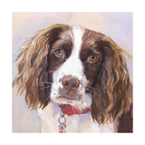 Georgia Springer Spaniel Print by Edie Fagan