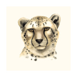 Safari Cat IV Posters por Grace Popp