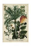 Vintage Tropicals III Prints by  Weinmann
