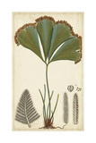 Foliage Botanique I Poster by  Turpin