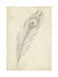 Peacock Feather Sketch II Art by Ethan Harper