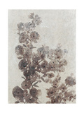 Sepia Flower Study I Prints by Tim