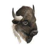 Western Animal Study IV Prints by Grace Popp