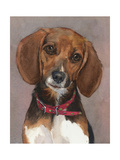 Lucy English Pocket Beagle Posters by Edie Fagan