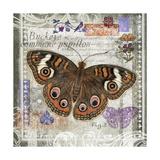 Butterfly Artifact II Prints by Alan Hopfensperger
