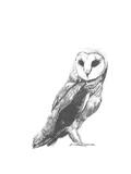 Wildlife Snapshot: Owl Premium giclée print van Naomi McCavitt