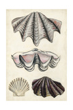 Seashore Field Notes IV Posters by Naomi McCavitt