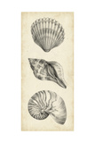 Antique Shell Study Panel I Art by Ethan Harper