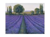 Lavender Field II Prints by Tim