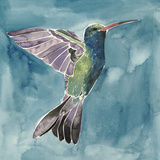 Watercolor Hummingbird I Posters by Grace Popp