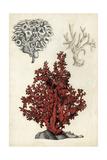 Seashore Field Notes V Prints by Naomi McCavitt