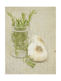 Herb Still Life II Prints by Irena Orlov