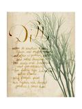 Herb Study II Premium Giclee Print by Grace Popp