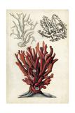 Seashore Field Notes VI Print by Naomi McCavitt