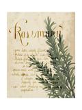 Herb Study IV Premium Giclee Print by Grace Popp