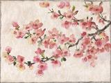 Cherry Blossom Composition I Kunstdruck von Tim