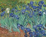 Garden of Irises (Les Irises, Saint-Remy), c. 1889 Posters van Vincent van Gogh