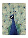 Blue Peacock II Prints by Tim