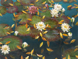 Lily Pad I Giclee Print by Elise Lunden