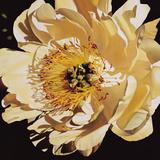 Yellow Peony Giclee Print by Jennifer Harmes