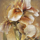 Golden Iris Giclee Print by  Carney
