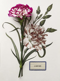 Floral Decoupage - Dianthus Giclee Print by Camille Soulayrol