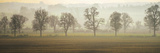 Misty Morning Giclee Print by Ella Lancaster