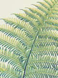 Frond II Giclee Print by Ella Lancaster