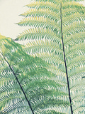 Frond I Giclee Print by Ella Lancaster