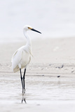 Beach Egret Giclee Print by Wink Gaines