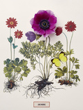 Floral Decoupage - Anemone Giclee Print by Camille Soulayrol