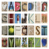 Coastal Alphabet Giclee Print by Mike Toy